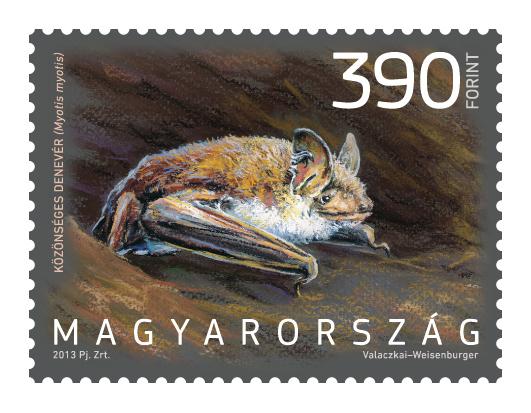 Magyarország állatvilága denevér